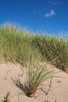 Free Sand Dune Grass Royalty Free Stock Photo - 3076355