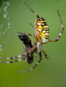 Free Spider 1 Stock Photos - 3076443