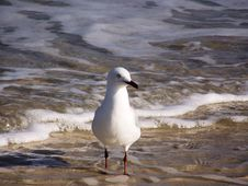 Free Segull Sea Stock Images - 3077454