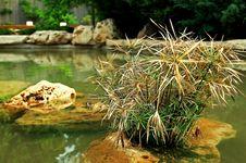 Free Stone Plant Royalty Free Stock Photos - 3077938