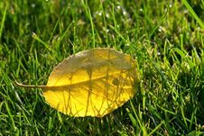 Free Golden Autumn Leaf Royalty Free Stock Image - 3078036