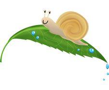 Free Snail Royalty Free Stock Image - 3078426