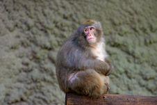 Free Monkey Stock Images - 3078664