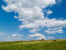 Free Landscape With Cows Stock Images - 3079304