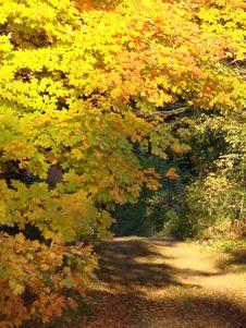 Peak Fall Foliage Royalty Free Stock Images