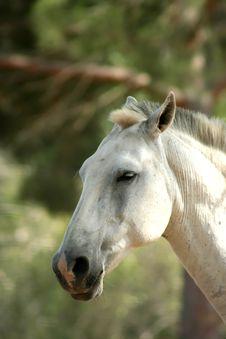 Free Horse Royalty Free Stock Photos - 3079748