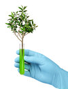 Free Growth In Biotech Test Tube Stock Images - 30708914