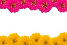 Free Frame Of Zinnias Flower Stock Images - 30700744