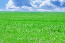 Free Green Field And Blue Sky. Stock Photo - 30702350