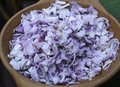 Free Scallion In Clay Dish Royalty Free Stock Photo - 30716615
