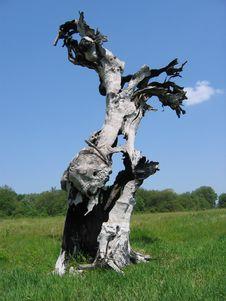 Free Tree Royalty Free Stock Image - 30710596