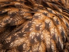 Free Feathers Stock Photography - 30714772