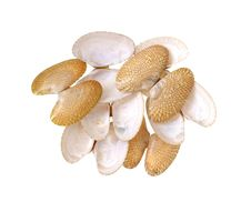 Free Clams Shells Stock Image - 30717271