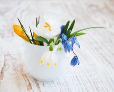 Free Spring Flowers Stock Photos - 30718863