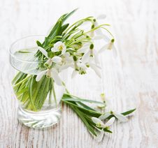 Free Bouquet Of Snowdrop Flowers Stock Image - 30718871