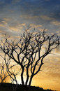 Free Sunset And Trees Royalty Free Stock Photos - 30724358