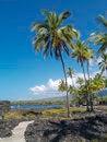 Free Hawaiian Trail Royalty Free Stock Images - 30729939