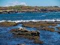 Free Hawaiian Turtle Royalty Free Stock Image - 30729946