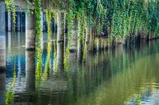 Reflected Pillars And Plants Royalty Free Stock Photography