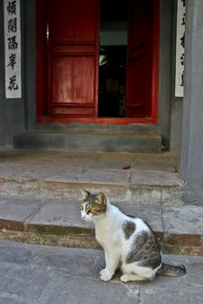 Free Cat In Hanoi, Vietnam Royalty Free Stock Photos - 30729358