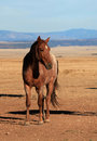 Free Reddish Brown Horse Stock Photos - 30736293
