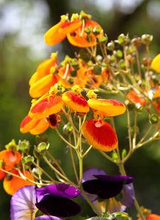 Free Garden Flowers Royalty Free Stock Photos - 30734238