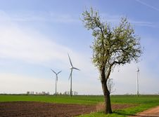 Wind Turbines And A Tree Stock Photos