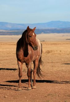 Reddish Brown Horse Stock Photos