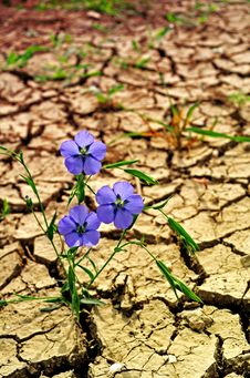 Free New Life On Dry Earth Royalty Free Stock Images - 30737719