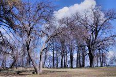 Free Tree Stock Photography - 30741202