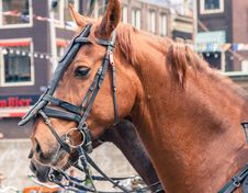 Free Mounted Horse Closeup Royalty Free Stock Images - 30746899