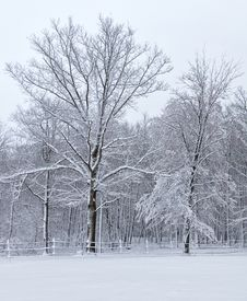 Free Snowy Landscape Stock Images - 30755424
