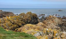 Free Coastal Scene In Guernsey With Sea Birds On The Rocks Stock Photos - 30757673