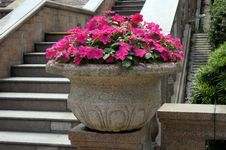 Free Beautiful Flowers Stock Image - 30762211