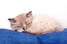 Free Small Kitten Stock Images - 30766554