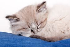 Free Small Kitten Sleeping Stock Images - 30766584