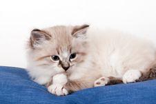 Free Little Kitten Royalty Free Stock Photo - 30766845