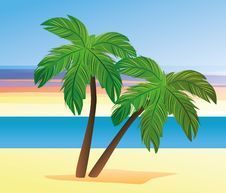 Free Palms On The Beach Royalty Free Stock Image - 30767306