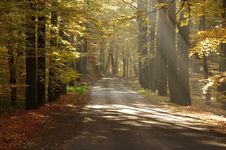Free Road In The Autumn. Royalty Free Stock Photo - 30767675
