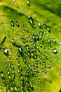 Free Dew Drop On Green Leaf Royalty Free Stock Photos - 30777228