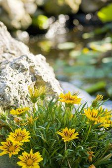 Free Flowers Stock Photos - 30772923