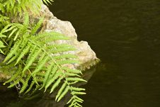 Free Fern And Rock Royalty Free Stock Image - 30772946