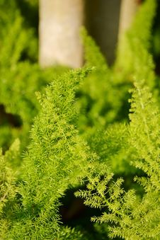 Free Fern Closeup Royalty Free Stock Images - 30772949