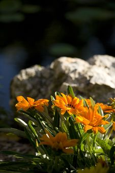 Free Flower And Rock Stock Photography - 30773002