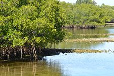 Free Florida Mangroves Stock Photos - 30773013