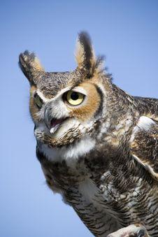 Free Owl Stock Photography - 30773032