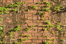 Free Grunge Brick Royalty Free Stock Photos - 30773068