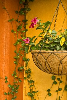 Free Hanging Plant Stock Images - 30773094