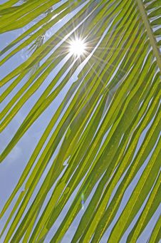 Free Coconut Leaf With Sunshine And Blue Sky Stock Image - 30773291