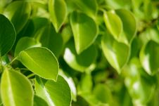 Fresh Spring Green Leaves Stock Photo